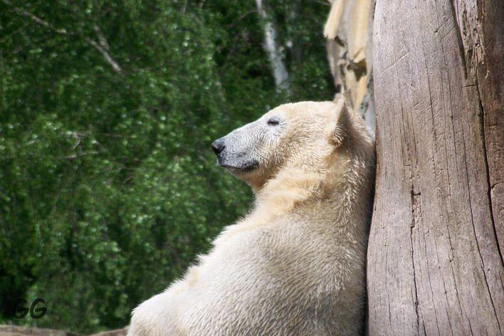 Erinnerung an Knut 28.04.2009