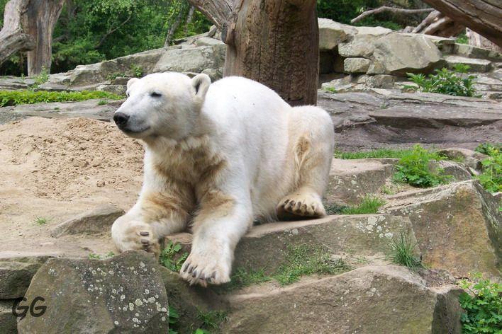 Erinnerung an Knut 15.05.2009