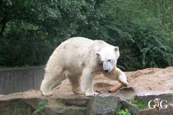 Erinnerung an Knut