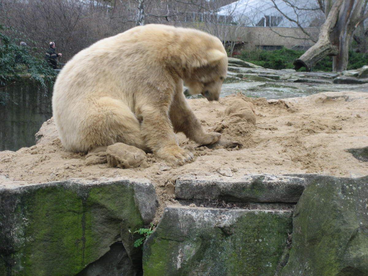 Erinnerung an Knut den Karpfenkiller März 2008