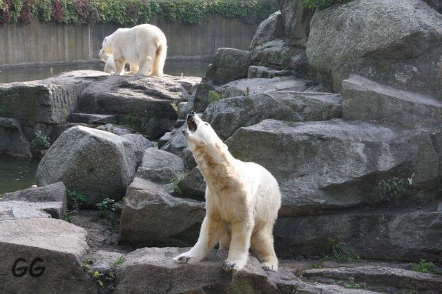 Erinnerung an Knut 03.10.2010