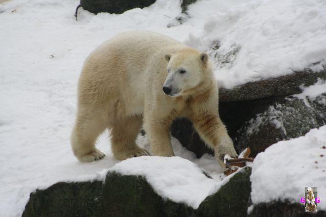 Erinnerung an Knut Dezember 2010