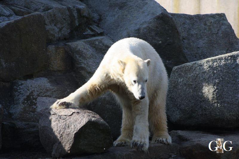 Erinnerung an Knut 13.03.11