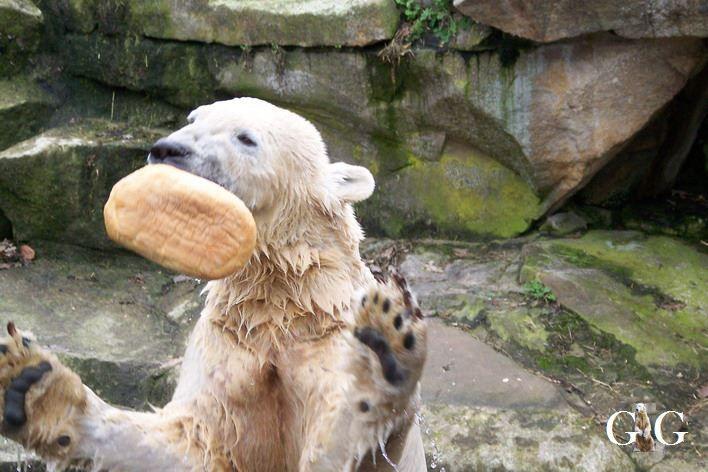 Erinnerung an Knut 2008