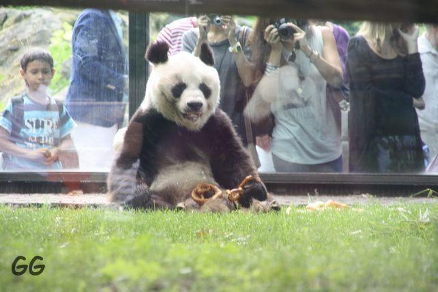 Erinnerung an Bao Bao August 2010