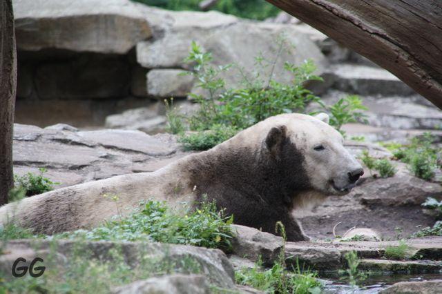 Erinnerung an Knut August 2010