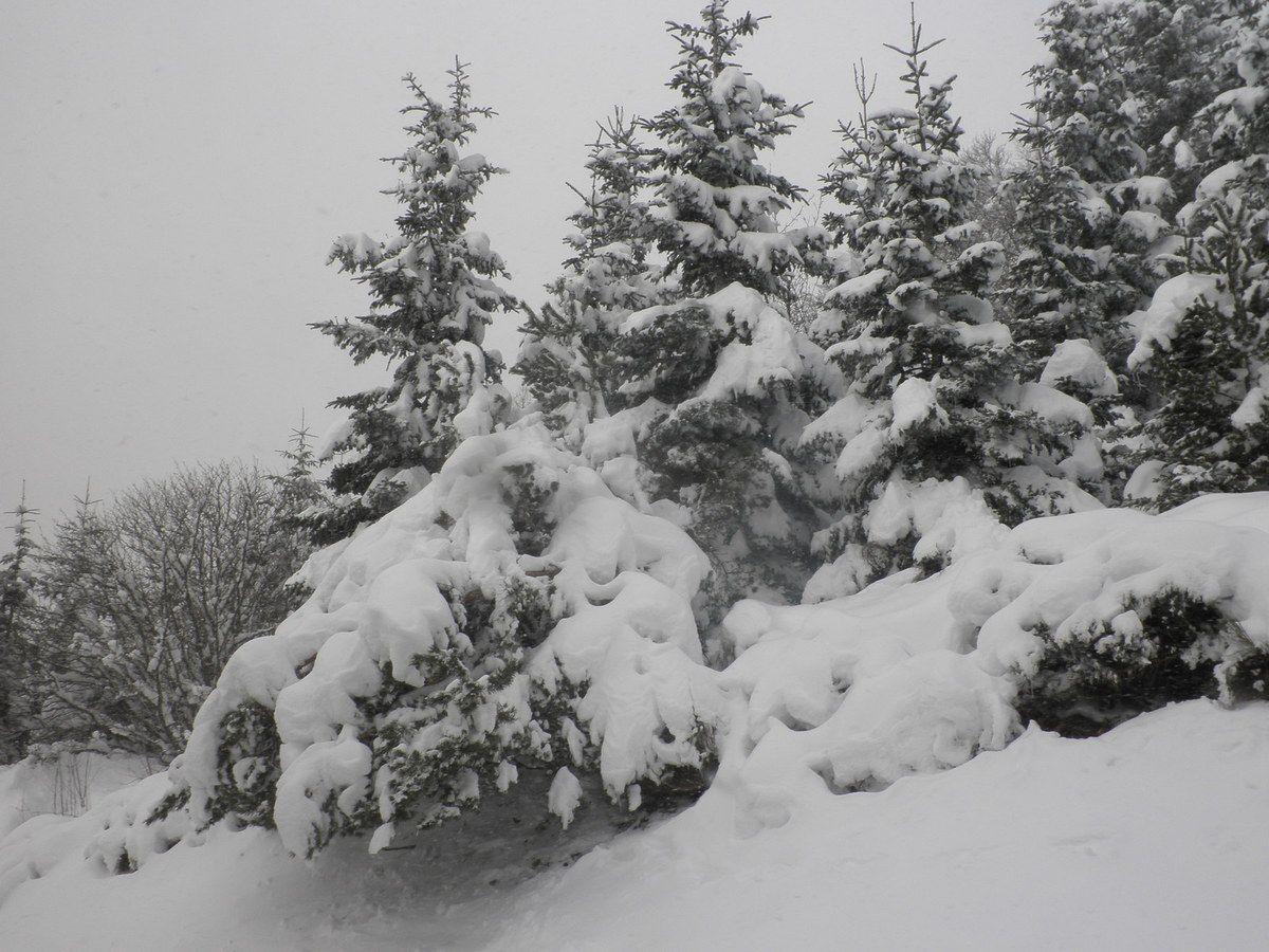 Et la forêt en chantilly !