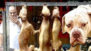 URGENT Stop the Yulin Dog Meat Festival