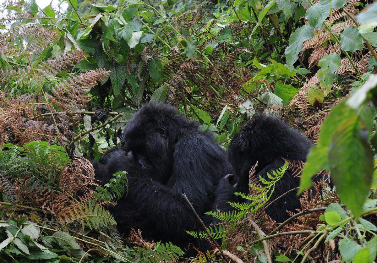 Rwanda, un sogno realizzato!