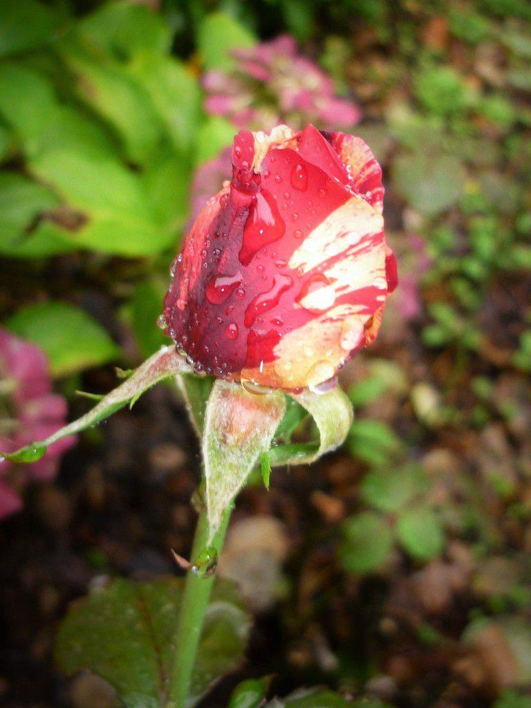 Bonjour fleuri du dimanche