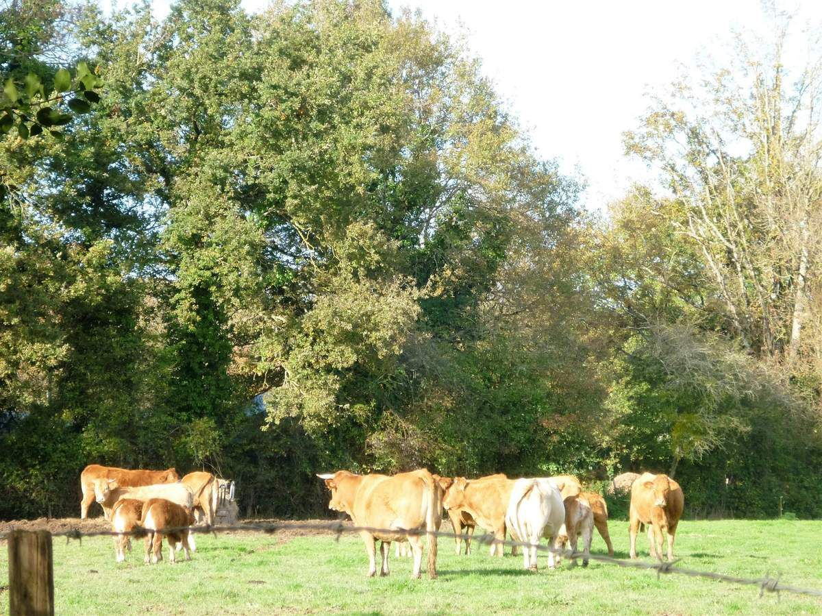 Oh les vaches ...!
