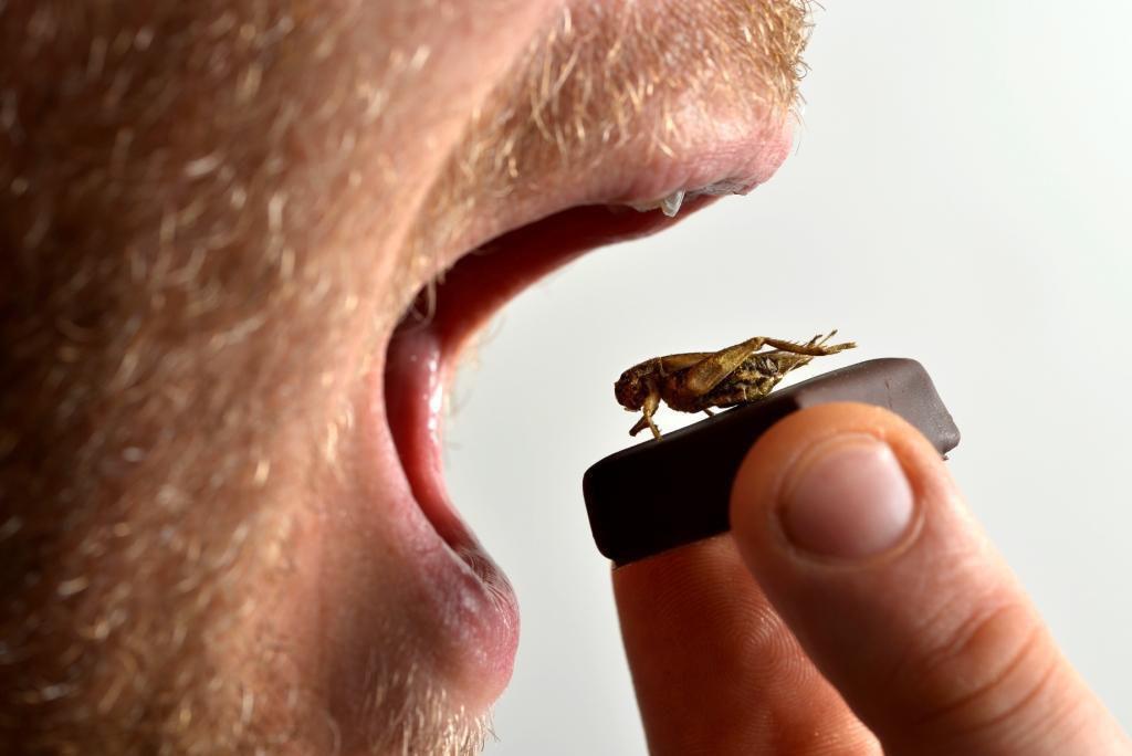 Chocolat insolite chocolat aux insectes
