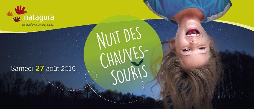 Première colonie de barbastelles découverte en Wallonie et Nuit des Chauves-souris ce 27 août