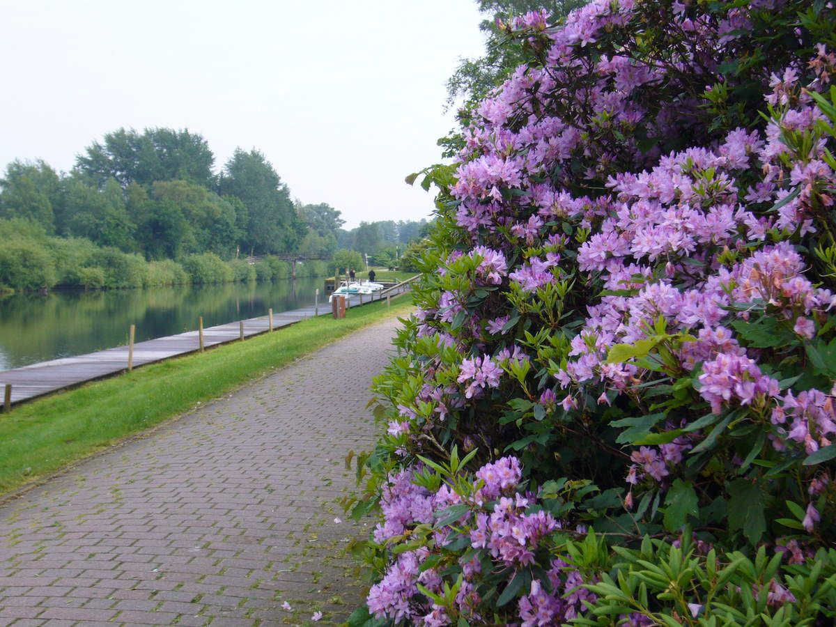 Les rhododendrons et le canal.