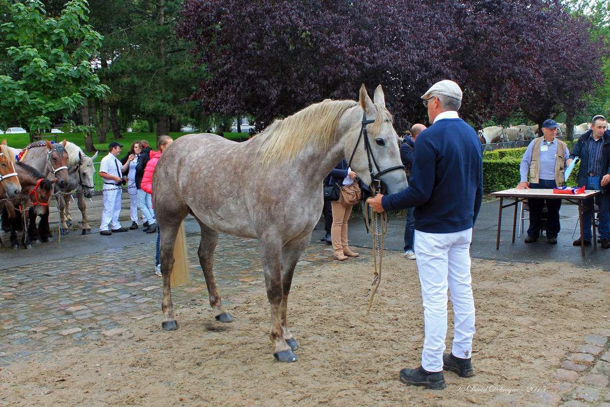 visite de la karyole Feest d'Hondschooste en compagnie de Xavier Bertrand