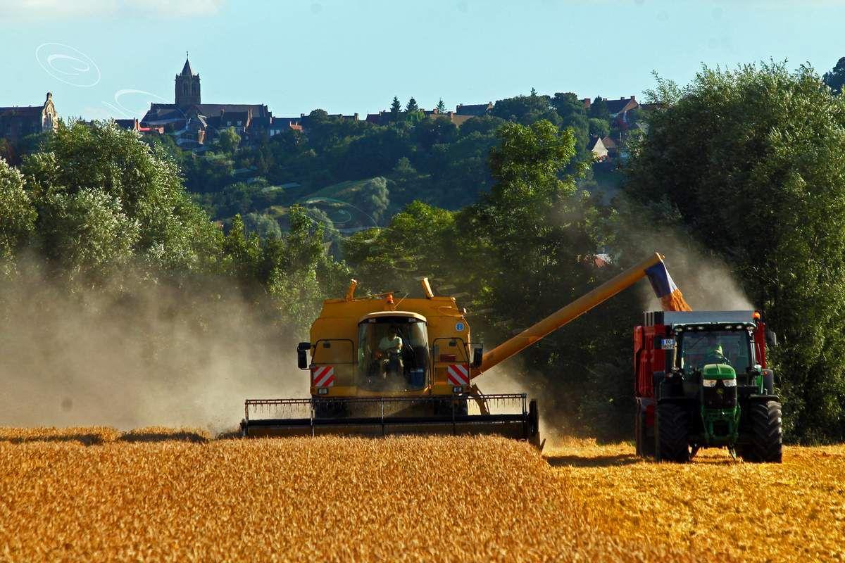 La moisson dans la campagne  Flamande