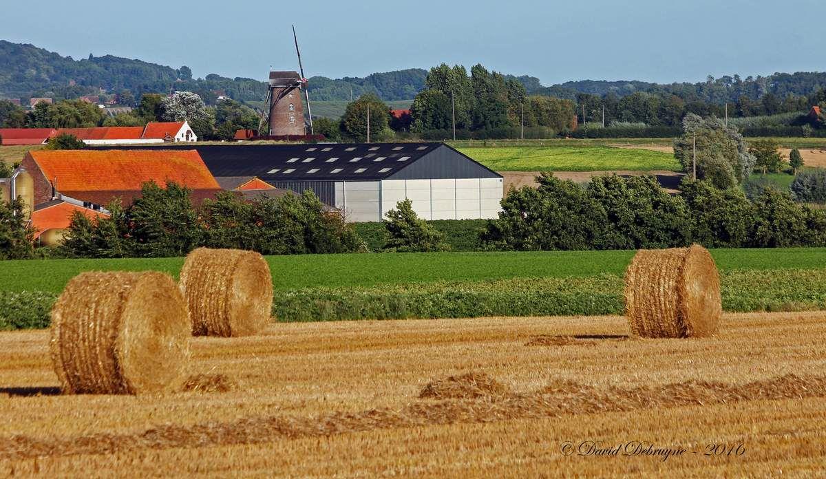 le Steenmeulen le moulin de pierre au cœur de la Flandre