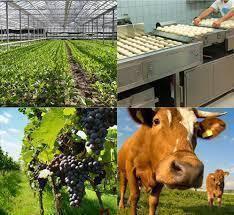 Eric Zemmour : &quot&#x3B;Pour les technocrates de Bruxelles, c'est de la faute des agriculteurs français&quot&#x3B;