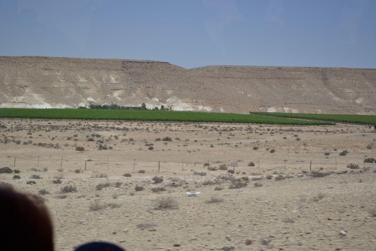 """""""Et ils feront fleurir le désert...."""" (Crédit photos: Tous droits réservés)."""