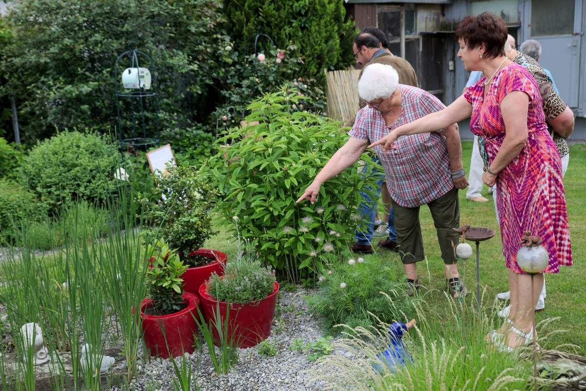 Tag der Offenen Gärten in Veitshöchheim war ein Riesenerfolg - Teil 5: Kräuter und syrische Mal- und Kochkunst standen im Garten von Anne und Doris Winkler im Mittelpunkt des Interesses