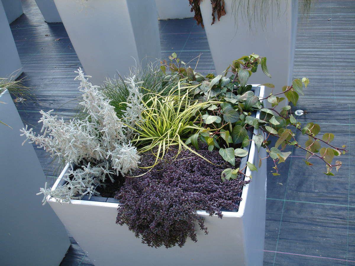 Vielfalt im Blumentopf auch für die kalten Tage: Mit Topfgartenkonzepten lässt sich auch im Herbst und Winter eine bunte Farbenpracht auf Balkon oder Terrasse zaubern.
