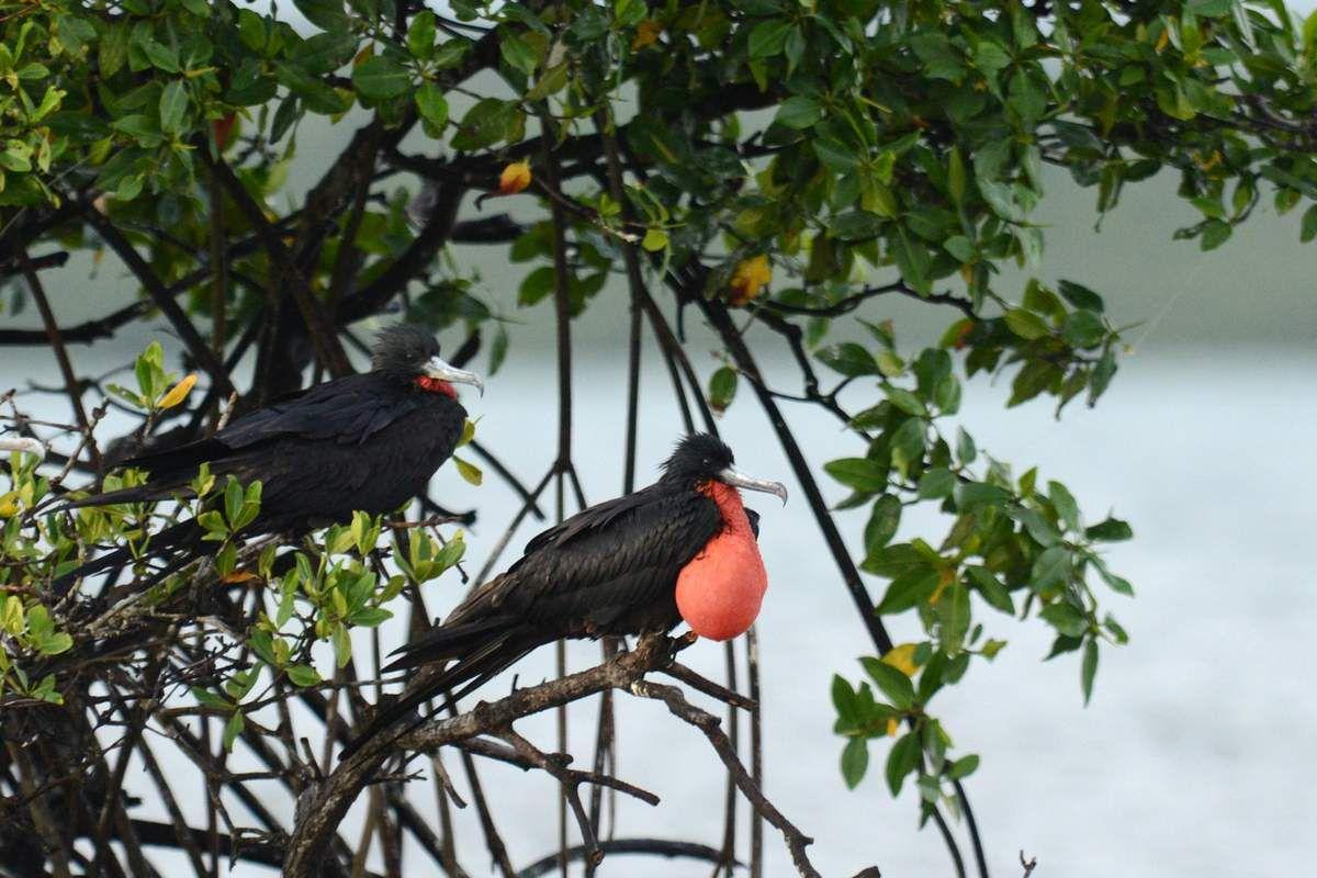 Oiseaux d'ailleurs