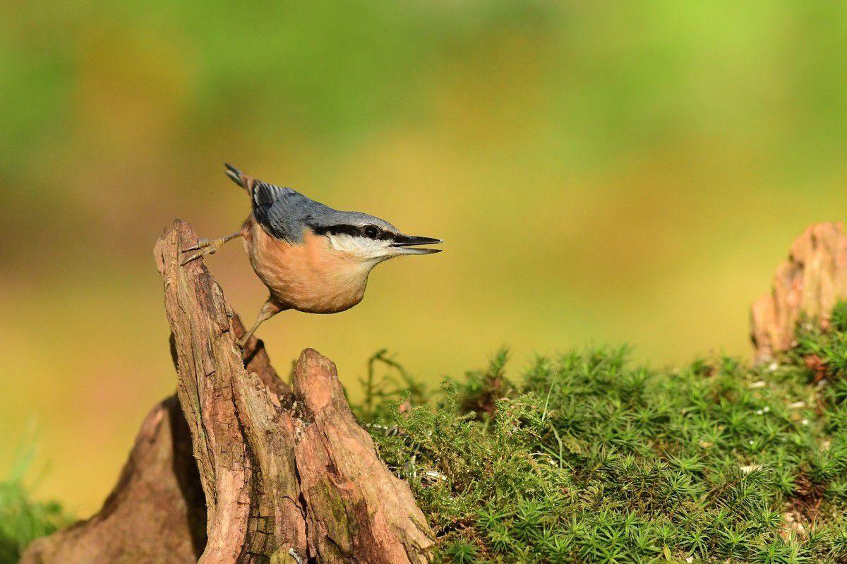 Les oiseaux du jardin - Sylvie Gautier, photographe ...