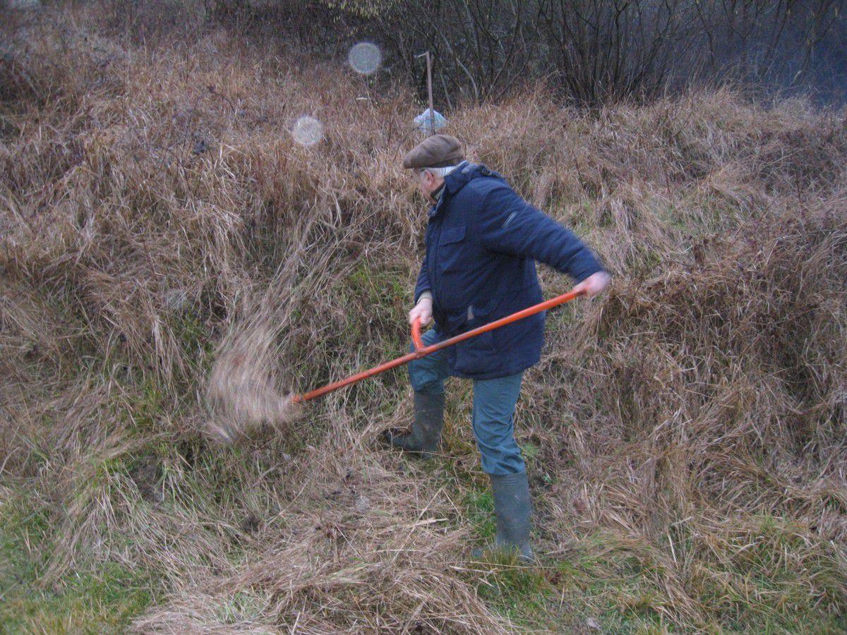 Les bénévoles éparpillés travaillent d'arrache-pied sous le regard des chèvres