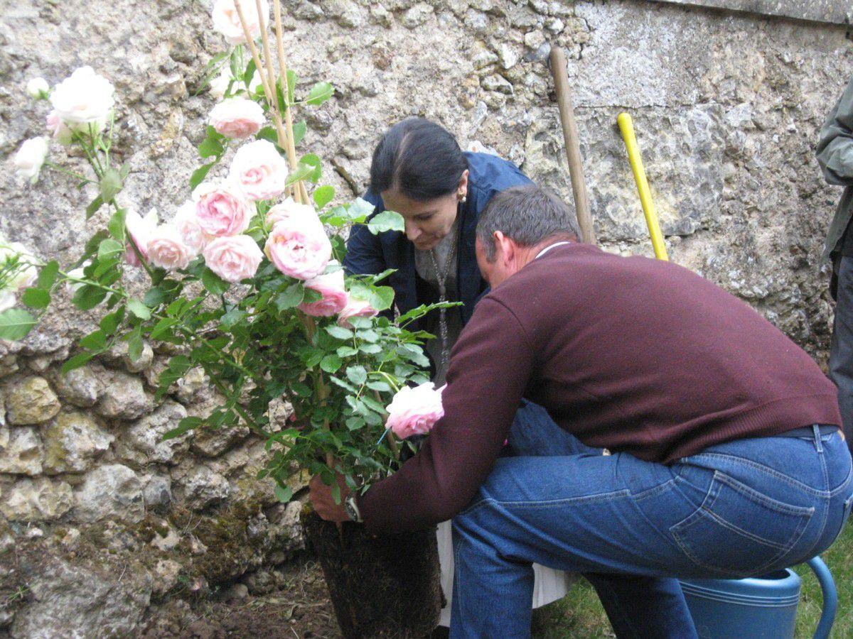 """Baptême de la rose """"Pierre de Ronsard"""" au manoir de la Possonnière. L'écrivain, Irène Frain, en était la marraine"""