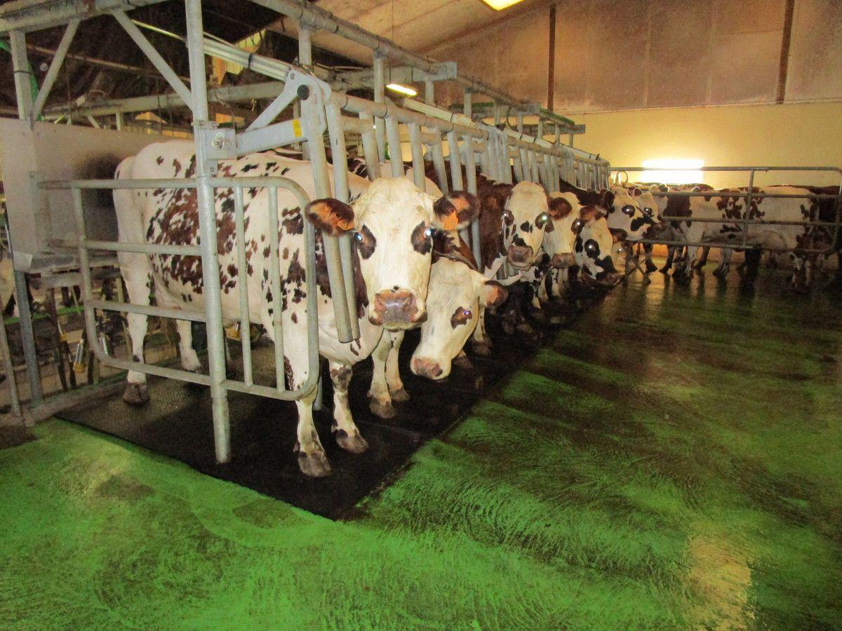 Les producteurs de lait ont un travail particulièrement contraignant