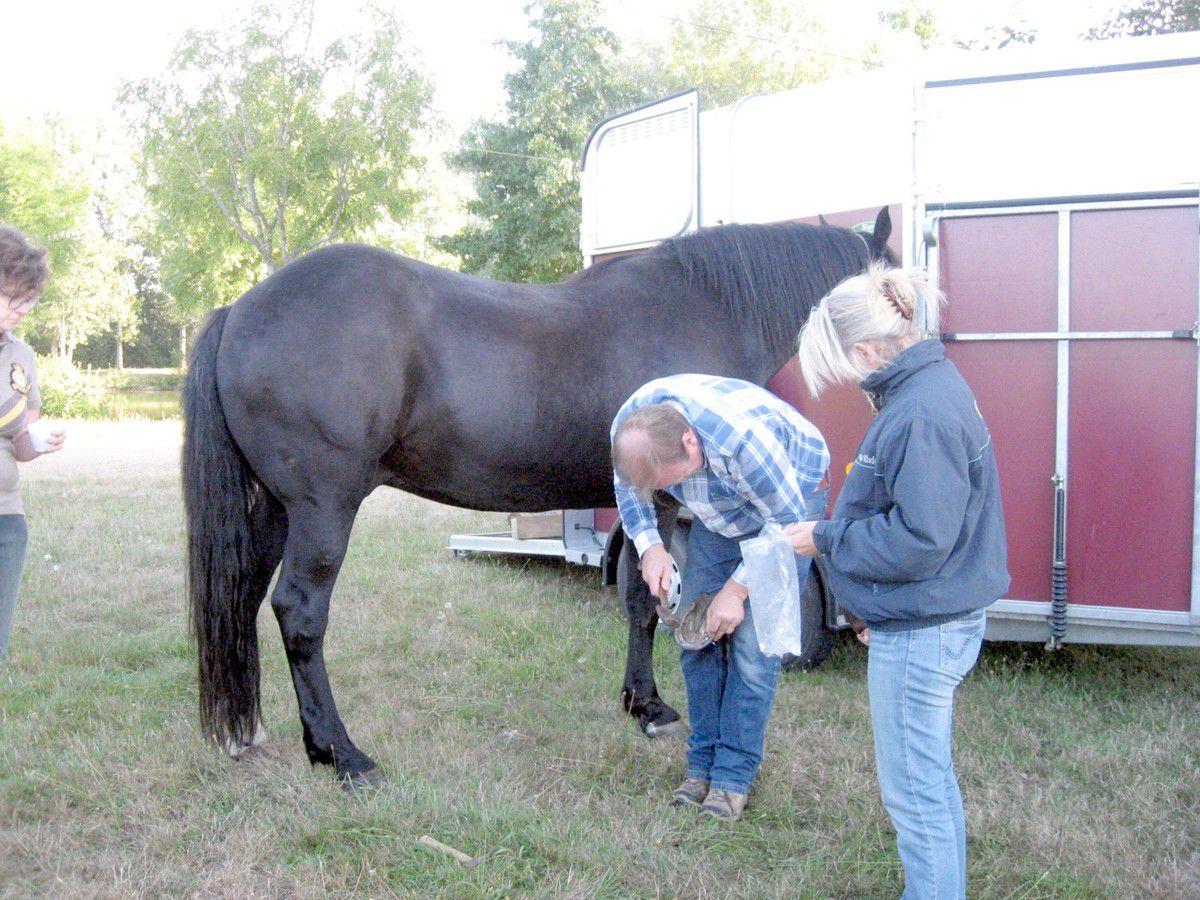 Avant de partir, le cavalier vérifie les fers de sa monture