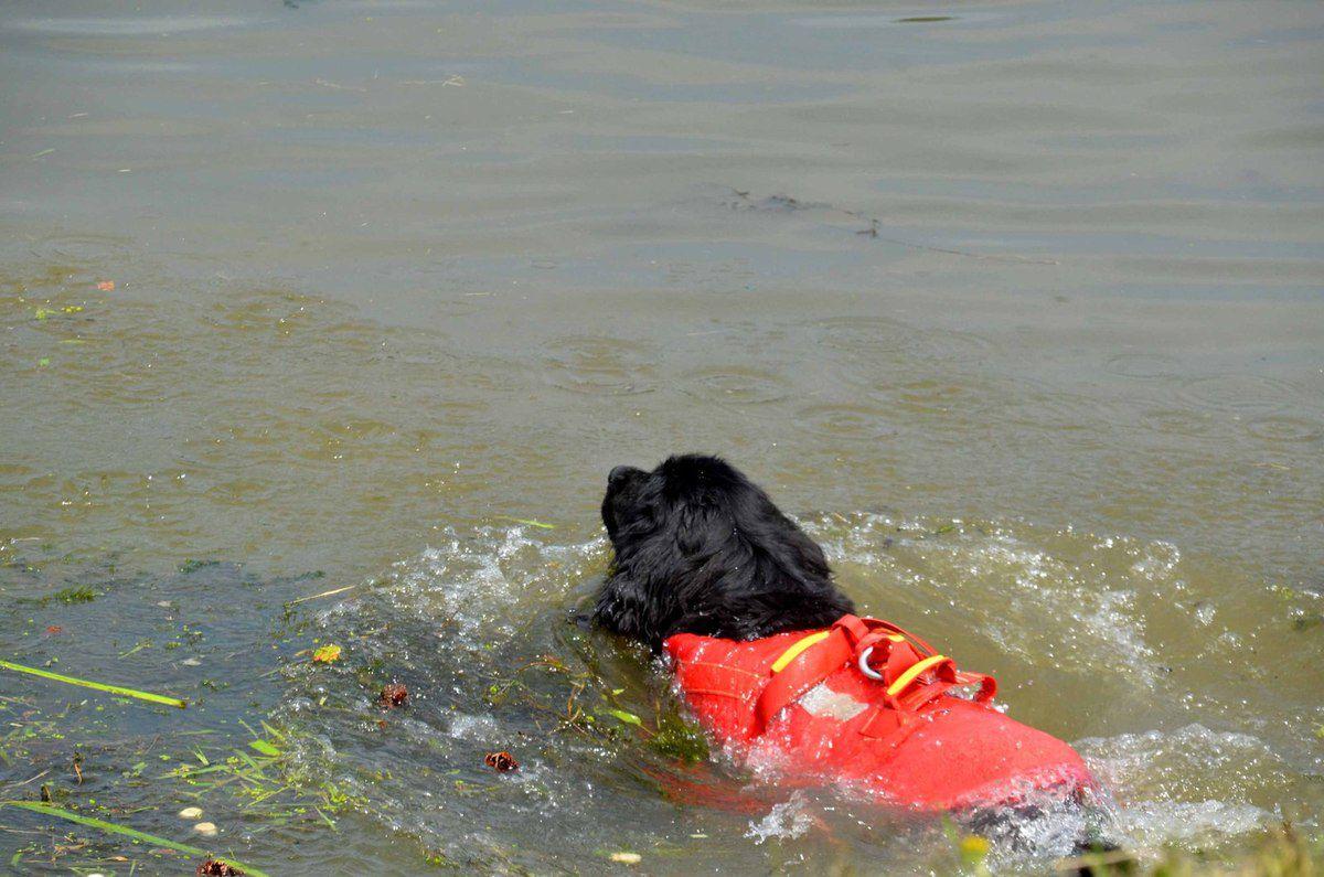 Les chiens sauveteurs ont bien animé la fête du port.