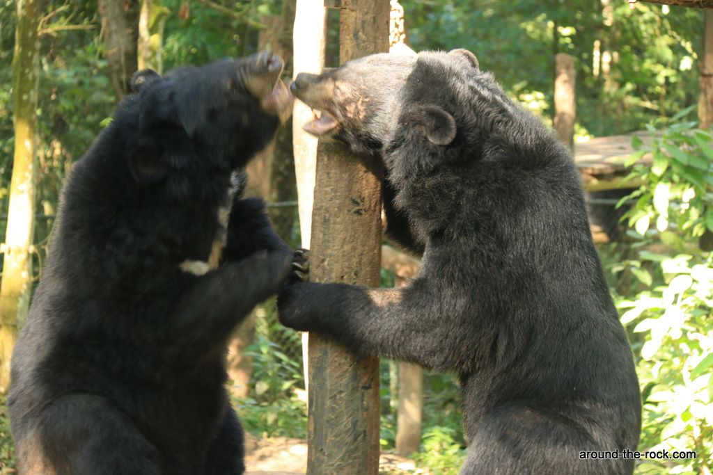 In the land of elephants, but also of Asian black bears.