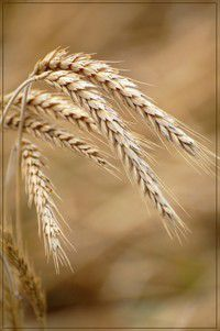 Hadith Nawawi 37 : La Grâce Divine (audio)