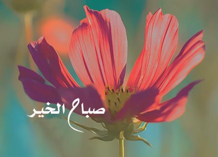Dire : «صباح الخير - Sabah al-khair et مساء الخير - massa al-khair» au lieu de dire «السلام عليكم - Assalam alaykoum» ? (vidéo)