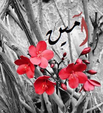 Est-il permis à la femme de dire : «آمين - amin» à voix haute lorsqu'elle prie derrière son mari ? (audio)