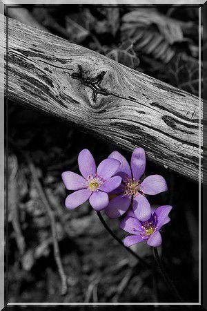 Le jilbab de couleur, comme le violet clair (vidéo)
