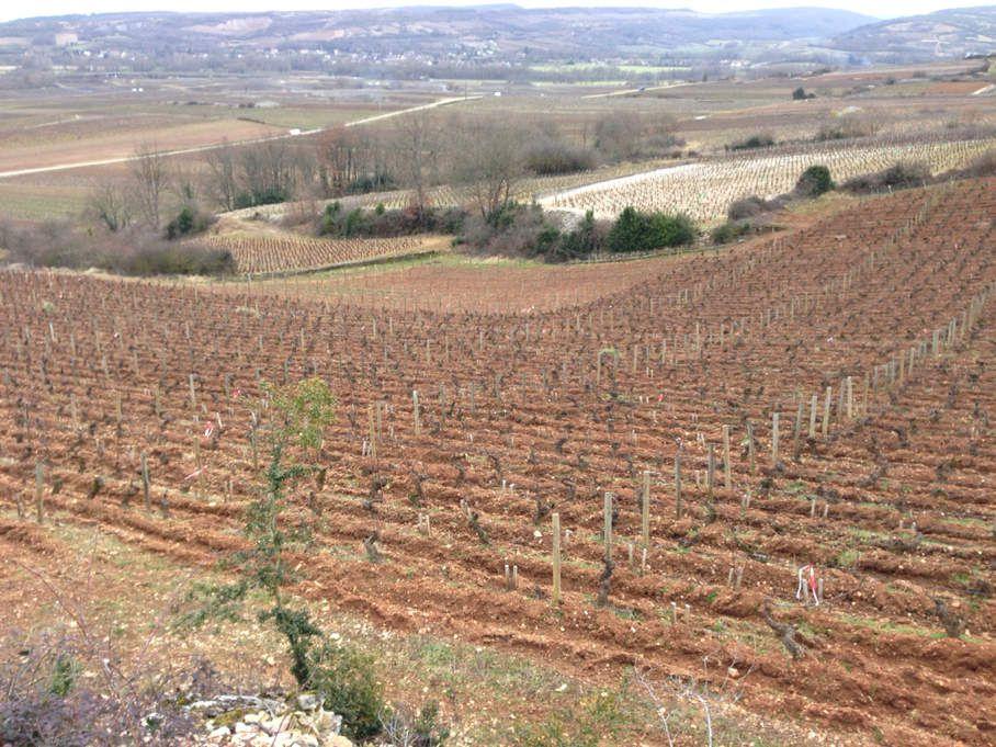 La Romanée à Chassagne - Vigne Morey-Coffinet