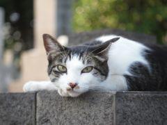 good cat !!
