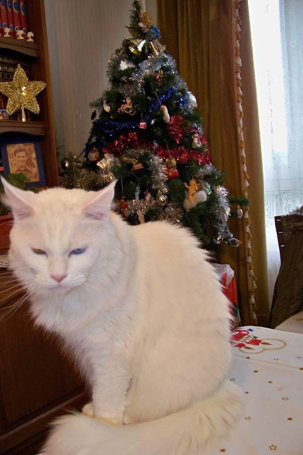 Le Noël de Tomy...