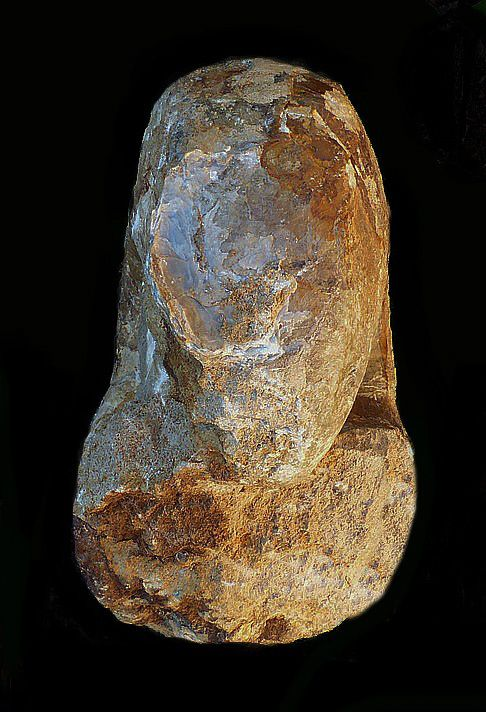 Cenoceras striatum