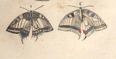 Aldrovandi, Insectis pl. I fig. 5 et 6 : futur papilio machaon L.