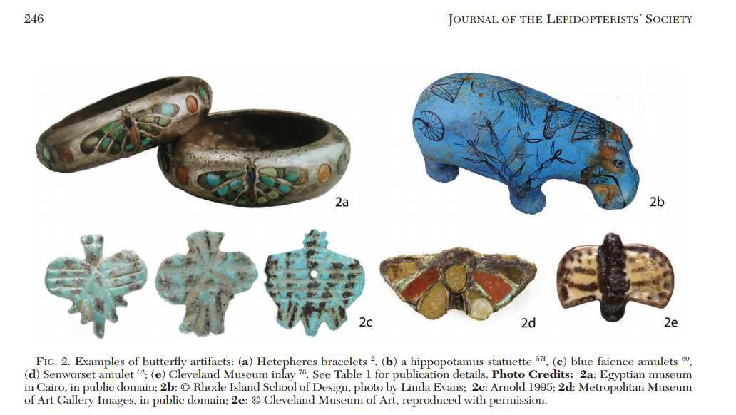 Figure 2, Copyright Nazari & Evans,  Journal of the Lepidopterist's Society 2015 vol. 69 page 246