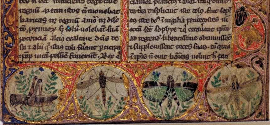 Cocharelli Egerton 3781 1r, British Library. Droit commun.