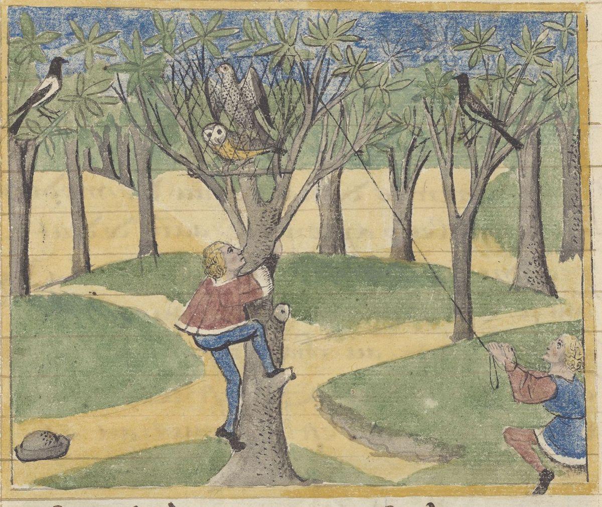 Capture d'un épervier avec une chouette mise en appât, Livre des déduits du Roy Modus et la royne ratio, Bibl. de l'Arsenal 3079 folio 210r, Gallica.