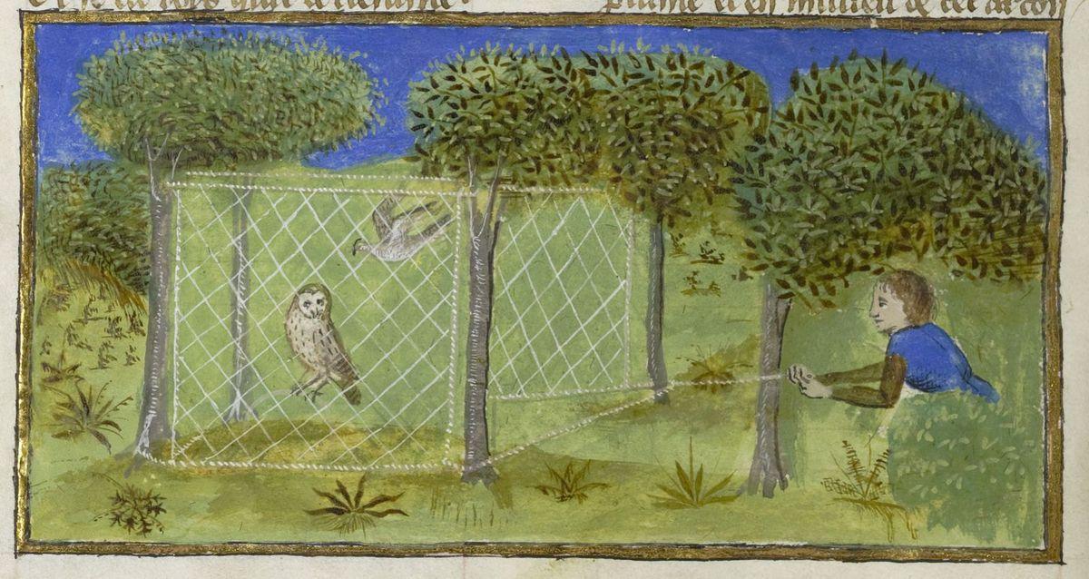 Capture d'un épervier avec une chouette mise en appât, Livre des déduits du Roy Modus et la royne ratio, Bnf fr. 1301 folio 92v, Gallica.