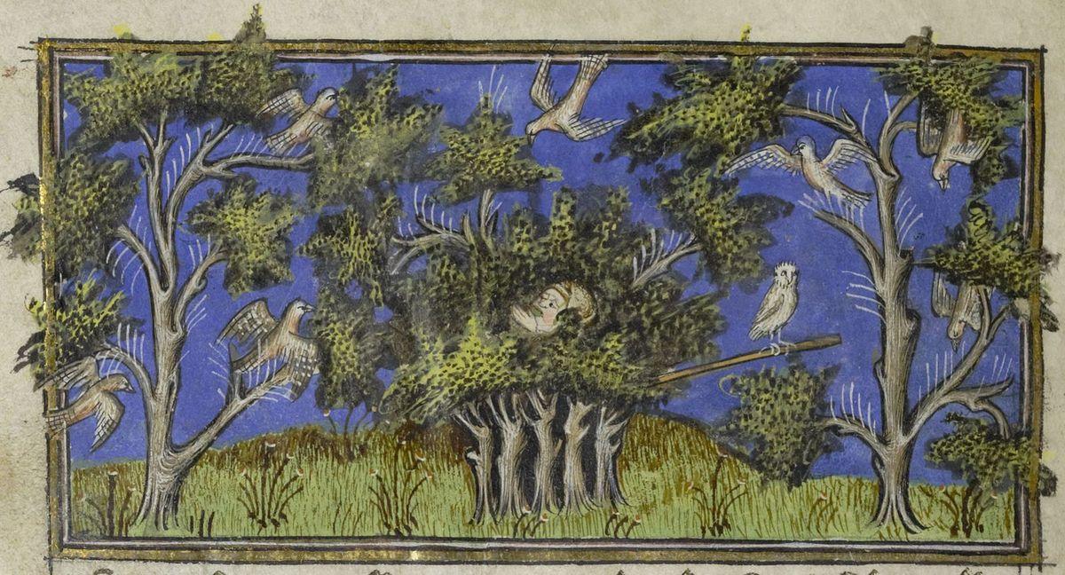Chasse à la pipée  avec une chouette mise en appât, Livre des déduits du Roy Modus et la royne ratio, Bnf fr. 1302 folio 95r , Gallica.