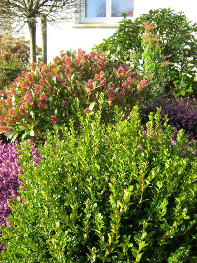 Abécédaire des floraisons 2014 - Le jardin de Camélia