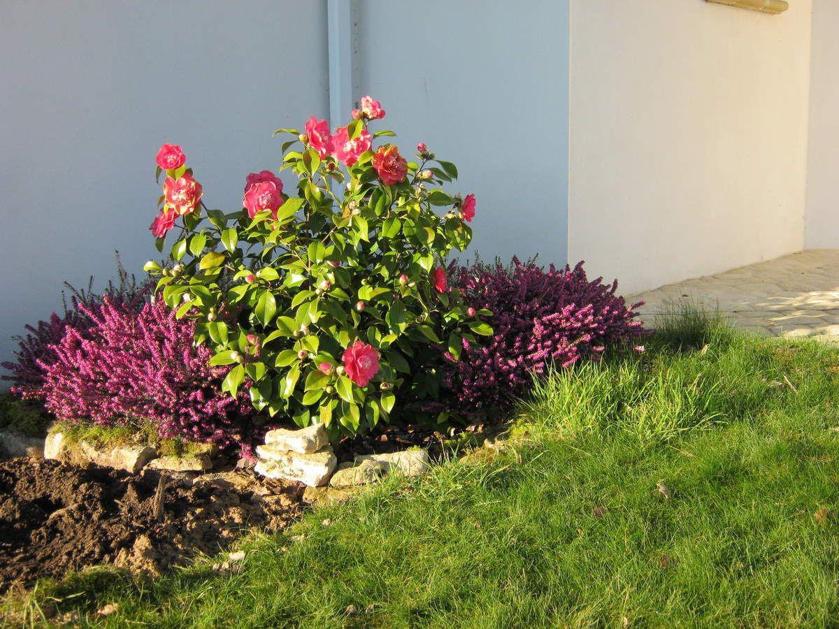 Le 10 Mars 2014, un camélia en fleurs égaye l'entrée de la maison