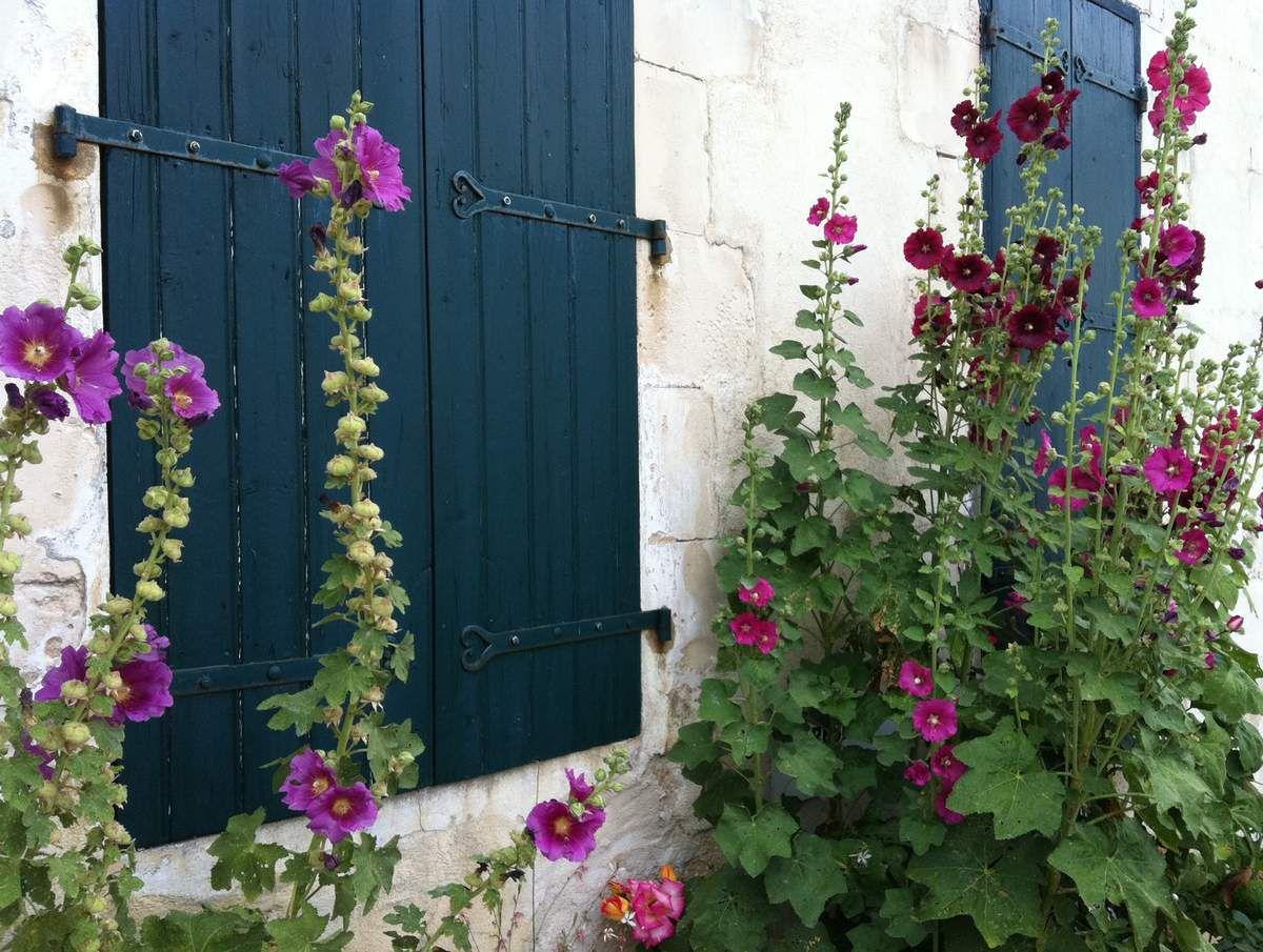 Trottoirs en fleurs